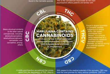 cannabinoids medical marjuana